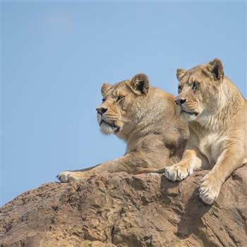 West Midlands Safari